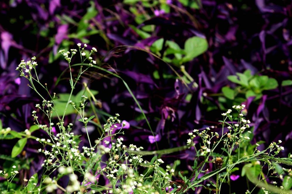 flower, flora, nature, garden, summer, leaf, field, plant, blossom