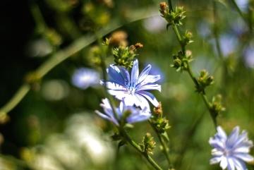 wildflower, nature, flower, leaf, summer, herb, plant, spring, grass, petal
