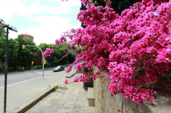 flower, garden, street, urban, shrub, red, bush, exterior
