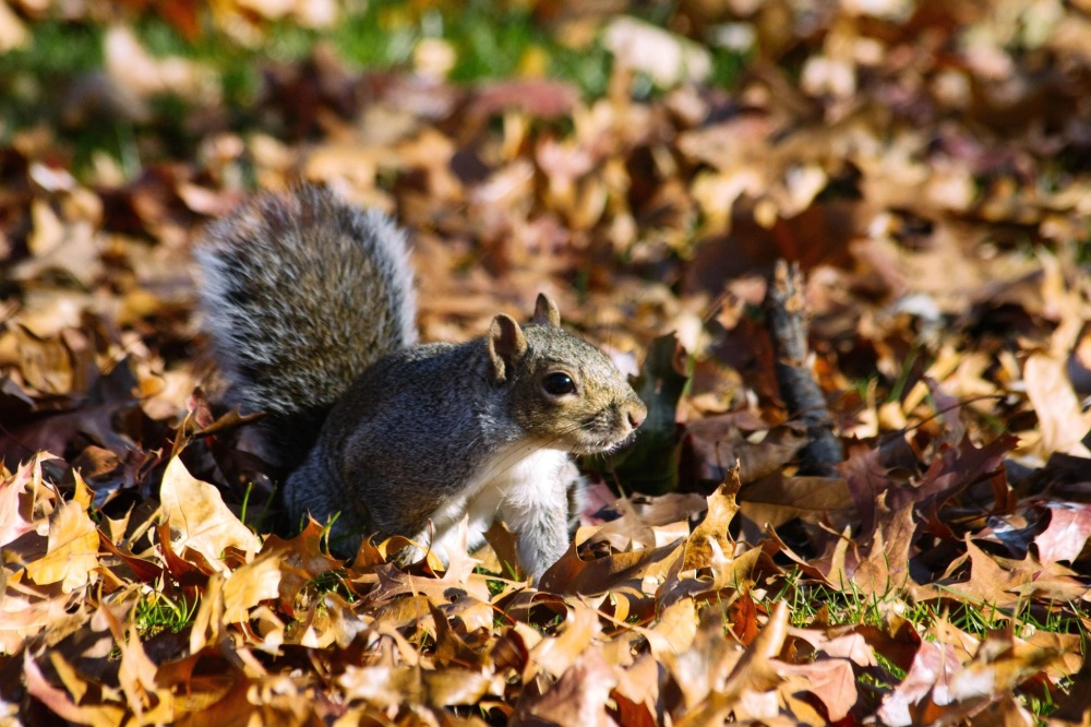 chipmunk, nature, squirrel, tree, rodent, leaves, autumn