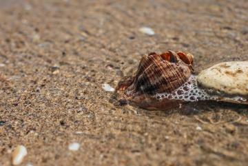 beach, sand, shell, seashore, seashell, sea, shore, nature