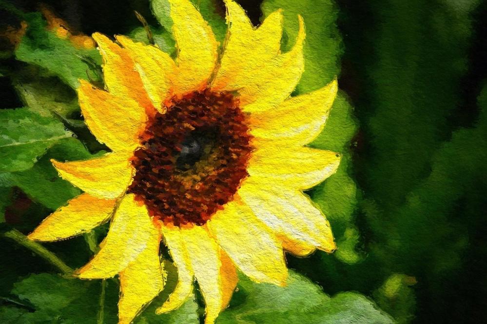 umenie, olejomaľba, príroda, leaf, flora, kvetina, slnečnica, žltá