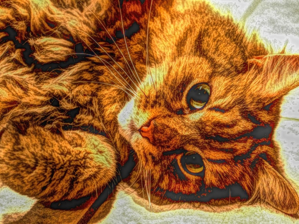 art, photomontage, cat, cute, fur, animal, pet, feline, kitten, kitty, whiskers