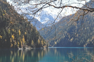tree, nature, wood, landscape, water, lake, leaf, autumn, forest
