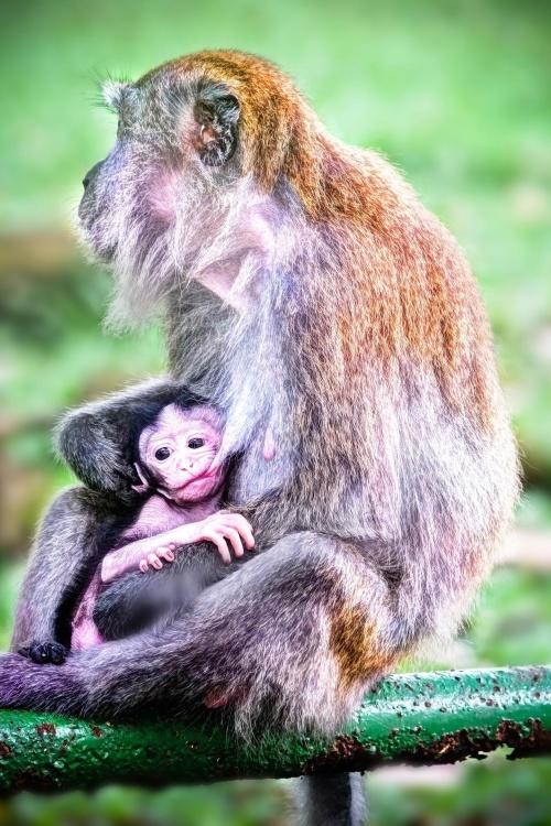 猴子, 灵长类动物, 野生动物, 猿, 野生动物, 动物, 自然, 动物