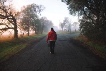 road, landscape, tree, fog, asphalt, man, mist