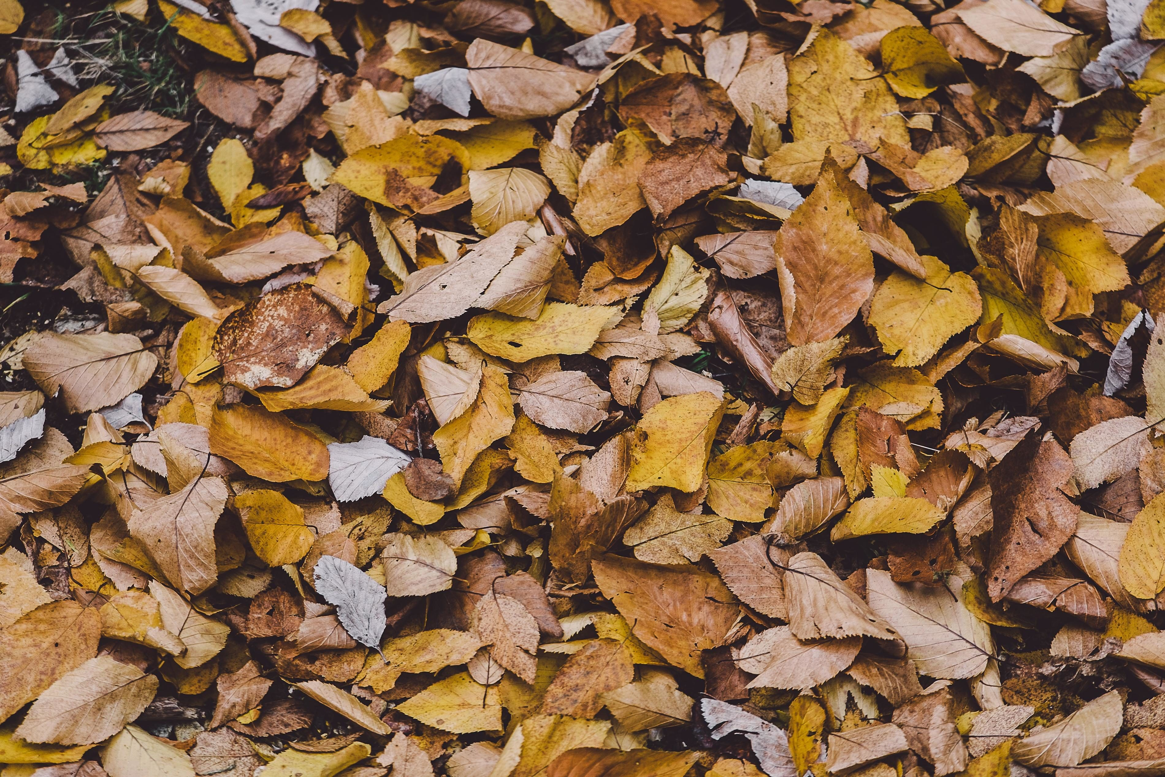 Free Picture Leaf Texture Nature Pattern Dry Flora