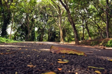 road, asphalt, autumn, tree, wood, nature, road, leaf, landscape