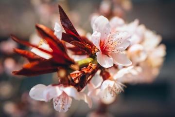 flower, nature, flora, leaf, petal, pistil, blossom