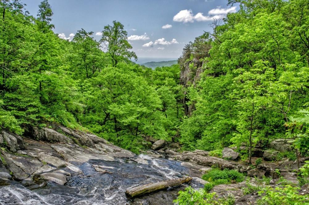 příroda, krajina, dřeva, listí, strom, léto, Les, proud
