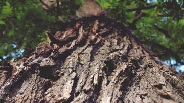 Kora, makro, drzewa, drewno, natura, środowisko, Las, conifer