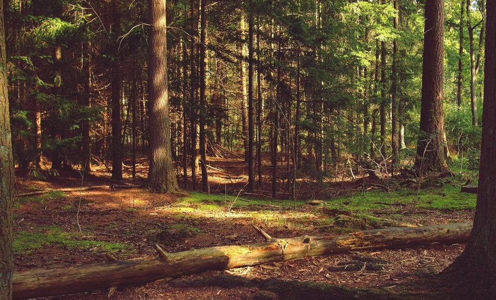 Forêt, bois, arbre, nature, paysage, feuille, environnement