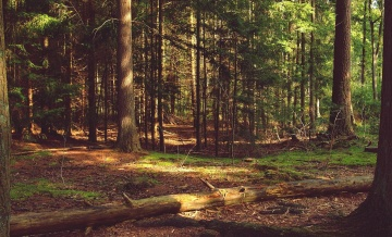 forest, wood, tree, nature, landscape, leaf, environment