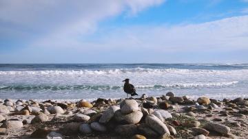 Costa, pájaro, agua, mar, agua, océano, playa, litoral, naturaleza