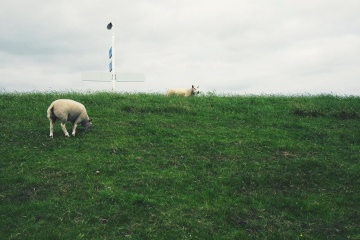 hill, animal, landscape, grass, agriculture, sky, sheep