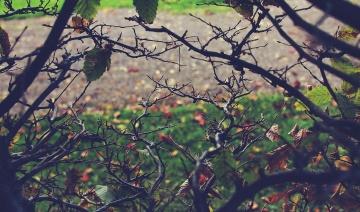 Arbusto, otoño, árbol, pájaro, hoja, rama, naturaleza, branchlet