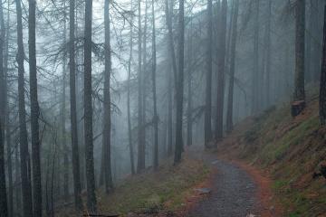 fog, tree, landscape, mist, wood, road, conifer, environment, nature, leaf