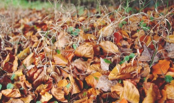 autumn, dry, ground, soil, grass, leaf, nature, flora