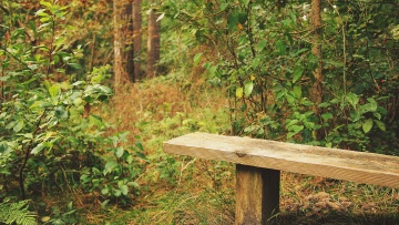 forest, wood, tree, nature, leaf, rural, bench