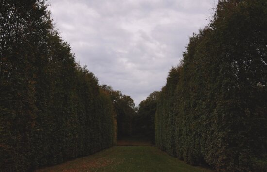 lawn, sky, summer, trees, road, garden, field, tree, landscape