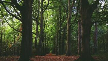 Forêt, chêne, été, arbres, herbe, extérieur, feuille, plante, environnement