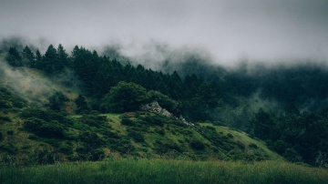 landscape, tree, fog, sky, nature, mountain, valley, forest