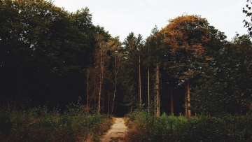 road, vegetation, branch, tree, landscape, wood, nature, conifer
