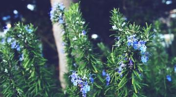 nature, flora, flower, leaf, summer, herb, grass