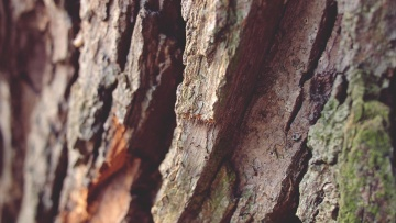brown, macro, rough, texture, dry, environment, pattern, redwood, dirty, bark, nature, wood, tree
