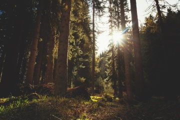 tree, wood, conifer, landscape, light, forest