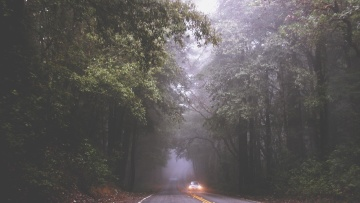 car, headlight, forest, tree, landscape, wood, nature, fog, road