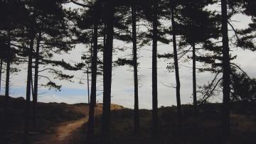 tree, landscape, nature, wood, conifer, dusk, shadow, dark