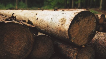 wood, tree, bark, firewood, nature, industry, wooden