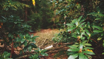 shrub, green, forest, tree, leaf, wood, rainforest, nature, plant