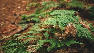 Foglia, foresta, albero, fogliame, giardino, flora, estate, foglie, felce, flora, natura, legno