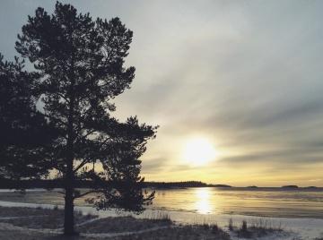 Árbol, paisaje, invierno, amanecer, naturaleza, puesta del sol, agua, sol, cielo, lago