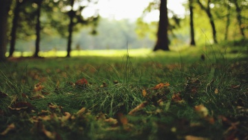 Forêt, printemps, paysage, arbre, herbe, nature, bois, feuille, feuillage, pré