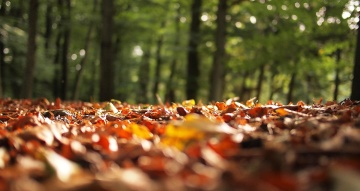 wood, nature, leaf, tree, landscape, light, daylight, flora, environment, leaf, autumn