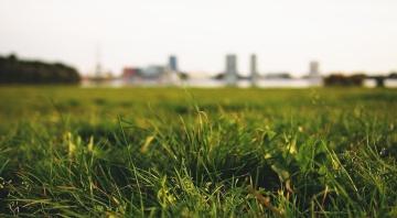 meadow, lawn, macro, field, grass, landscape, sky, nature