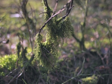 moss, lichen, forest, nature, tree, wood, branch, foliage