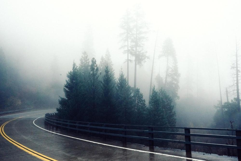 Kostenlose Bild: Nebel, Nebel, Natur, Landschaft, Baum, Regen, Holz ...