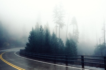 fog, road, mist, nature, landscape, tree, rain, wood, asphalt