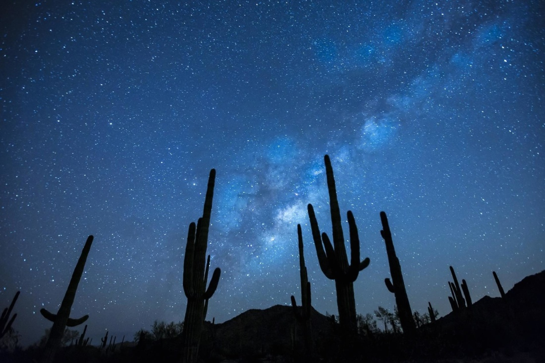 moonlight, sky, cactus, night, dark, nature, light, dark, landscape, silhouette
