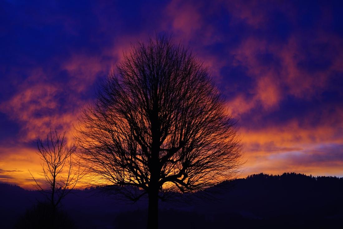 dawn, sunset, sun, tree, sky, atmosphere, landscape