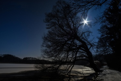 tree, dawn, landscape, sunset, lake, moon, water, winter, nature
