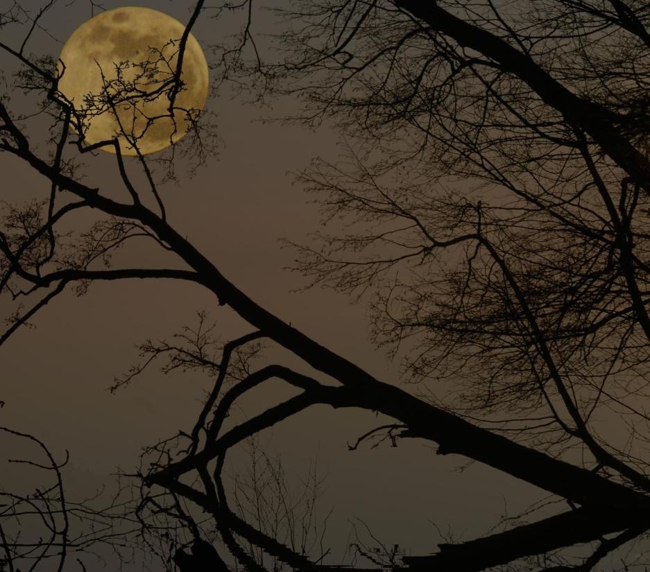drvo, silueta, pozadinskim osvjetljenjem, zore, mjesečina, grana, magla, drvo