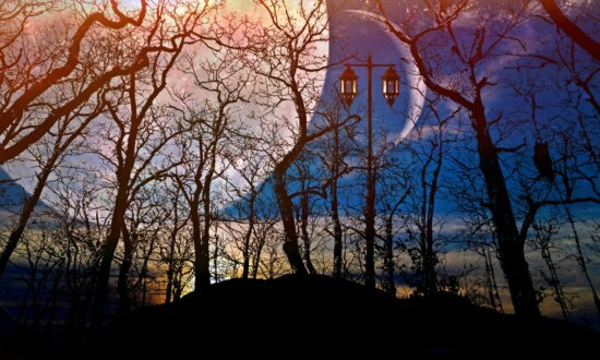 tree, landscape, sky, photomontage, forest, Moon