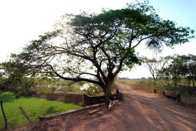 arbre, paysage, nature, bois, chêne, environnement, herbe, route