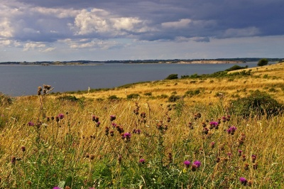 landscape, nature, summer, grass, land, field, meadow, coast