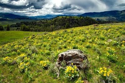 paisaje, naturaleza, hierba, campo, verano, flor, montaña, cielo, Prado